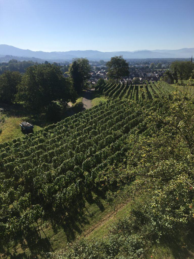 Der Breisgau, köstlicher Wein im Sonnenschein 9