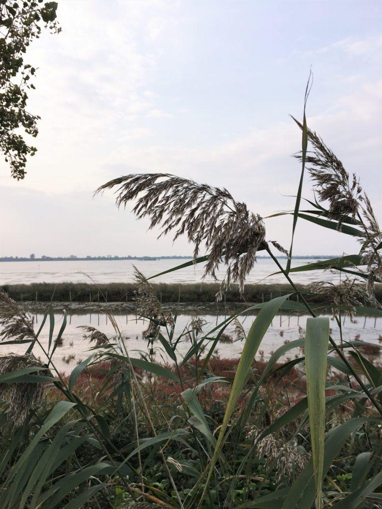 Mücken, Schilf und viele Reiher: Im Delta des Po 2