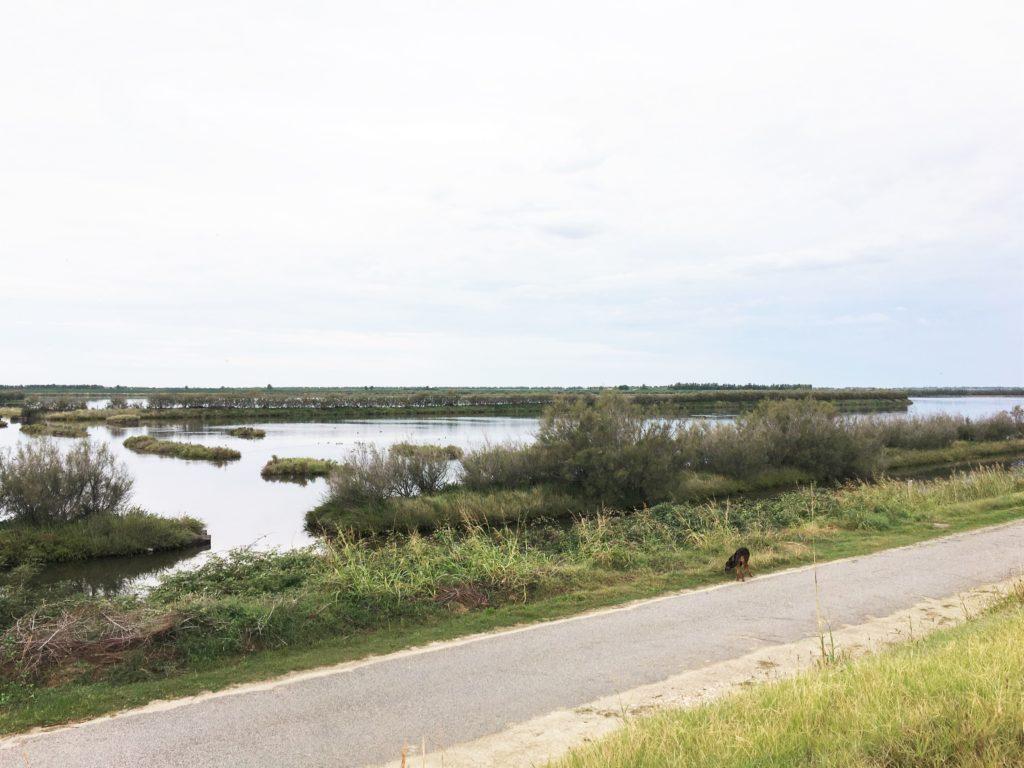 Mücken, Schilf und viele Reiher: Im Delta des Po 4