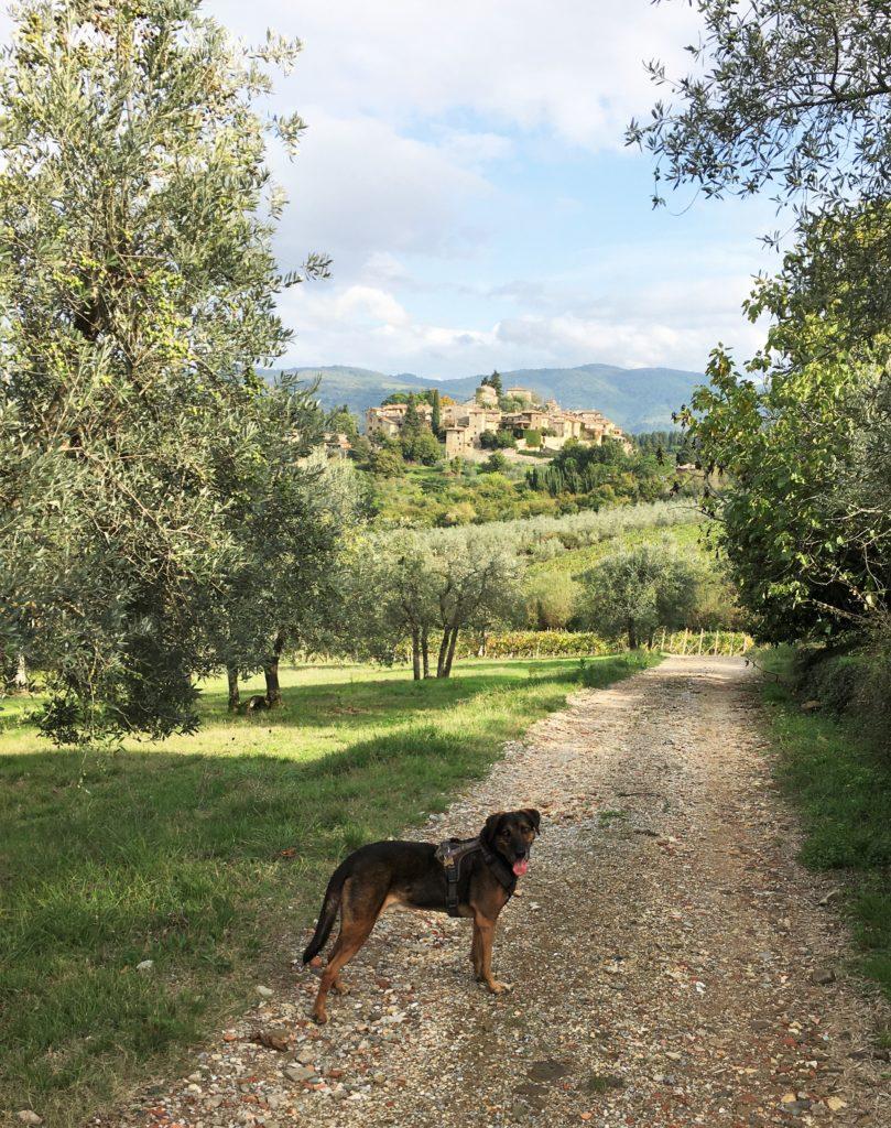 Schock in Greve di Chianti und eine Nacht vor der Festung 18
