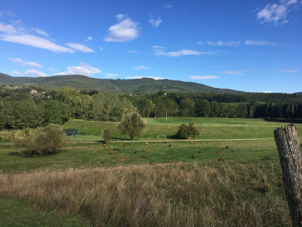 Auf der Suche nach einem sinnvollen, unabhängigen Leben: Valentina und die Ziegen 3