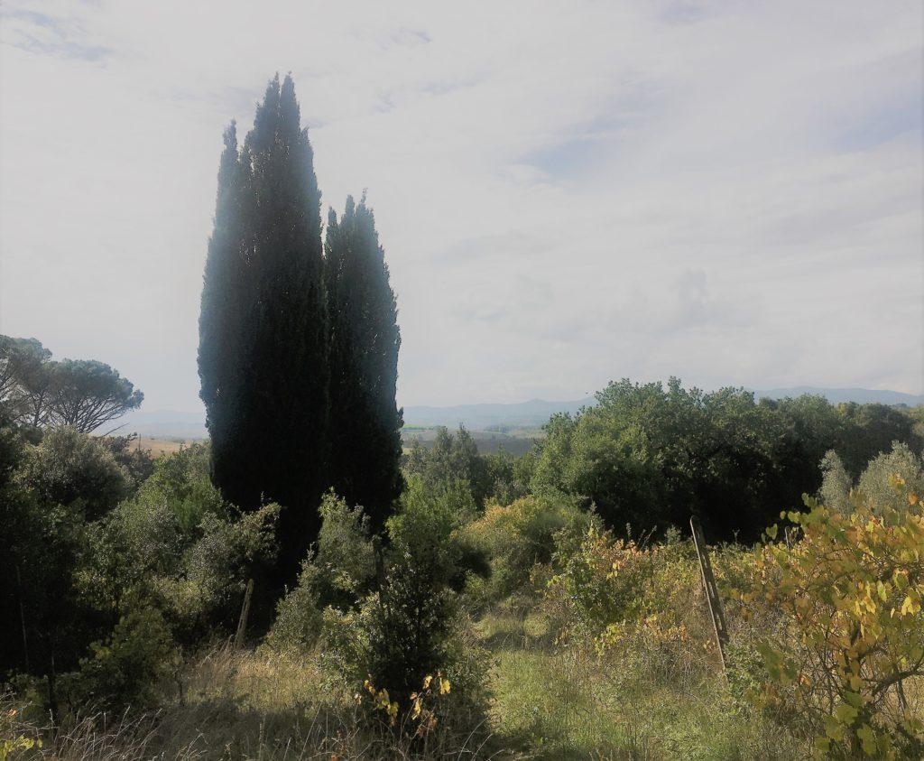 Nach Westen nach Lari und Sant'Ermo: Treffen mit Kristina 10