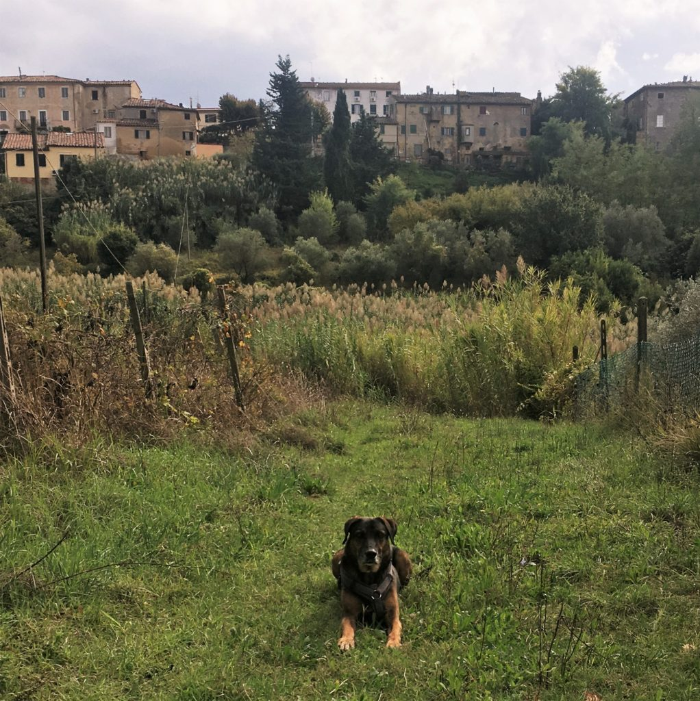 Nach Westen nach Lari und Sant'Ermo: Treffen mit Kristina 14