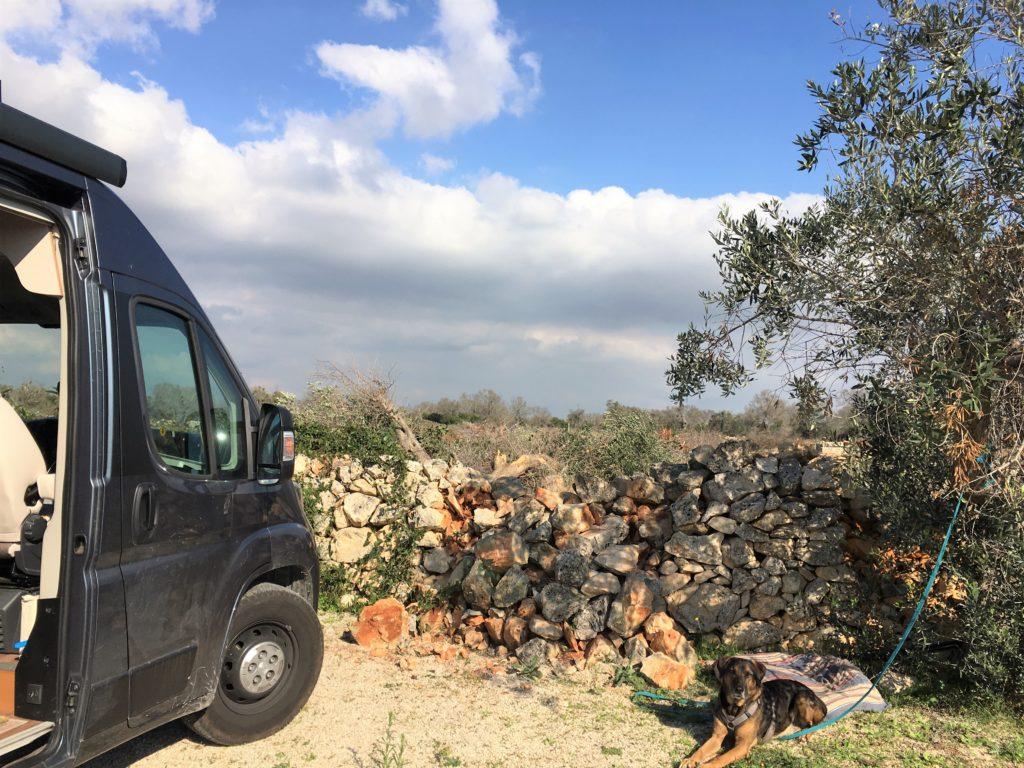 Anker werfen im Olivenhain: Die Entdeckung des Salento 8