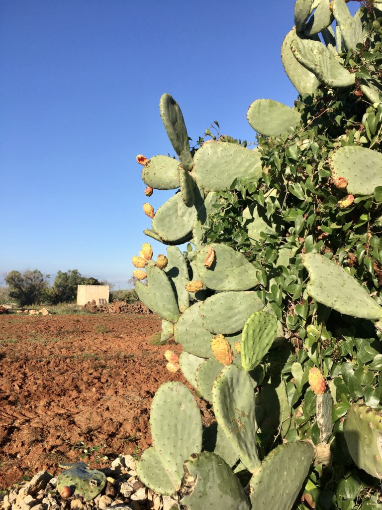 Anker werfen im Olivenhain: Die Entdeckung des Salento 11