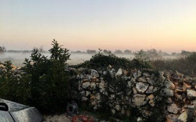 Anker werfen im Olivenhain: Die Entdeckung des Salento