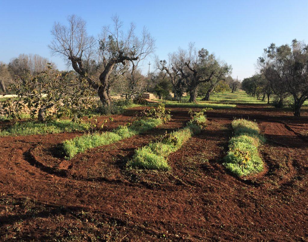 Anker werfen im Olivenhain: Die Entdeckung des Salento 13