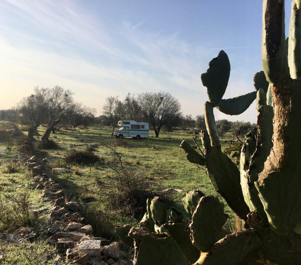 Anker werfen im Olivenhain: Die Entdeckung des Salento 14