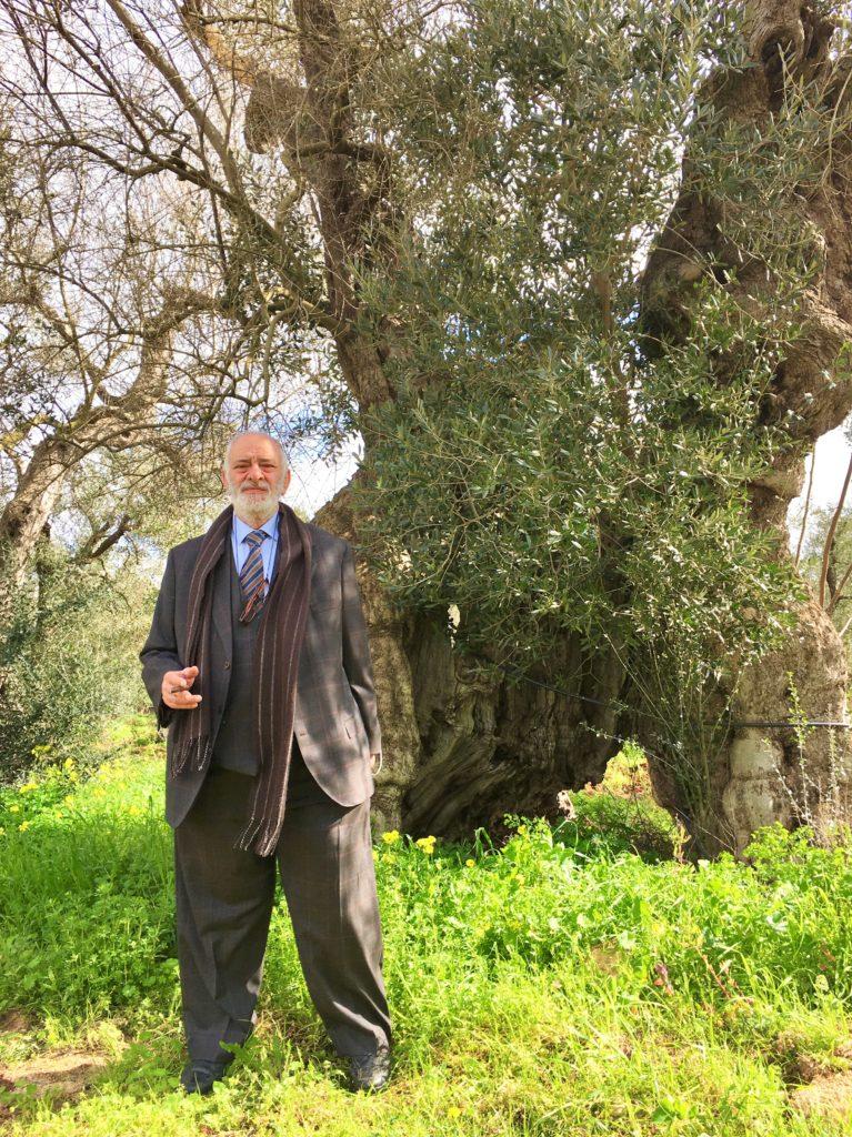 Olivenbäume in Not: Mit der Kettensäge gegen Xylella 3