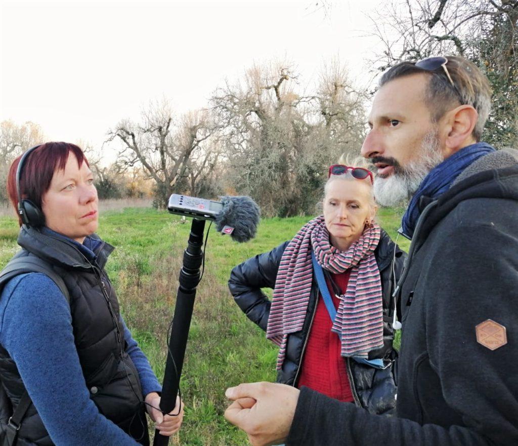 Olivenbäume in Not: Mit der Kettensäge gegen Xylella 6