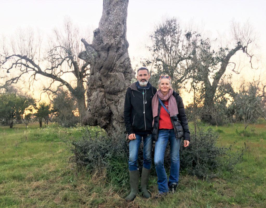 Olivenbäume in Not: Mit der Kettensäge gegen Xylella 7